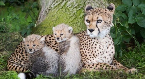 Dublin Zoo Family Package